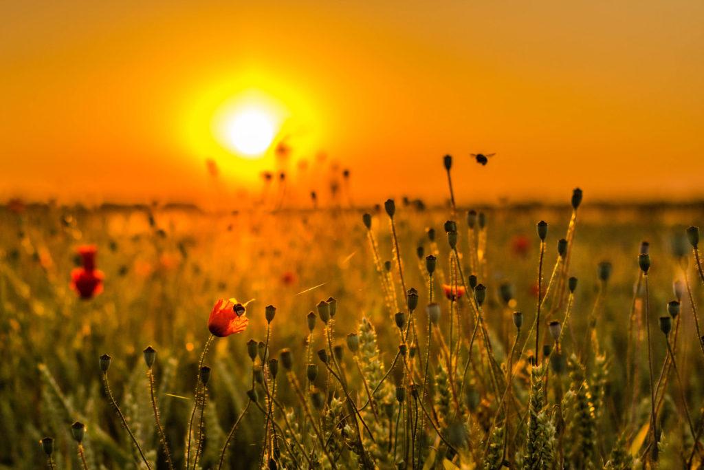 солнце летом